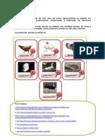 Imagen de Avicultura