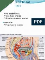 1.-Histofisiologia Del Aparato Sexual Masculino y Femenino