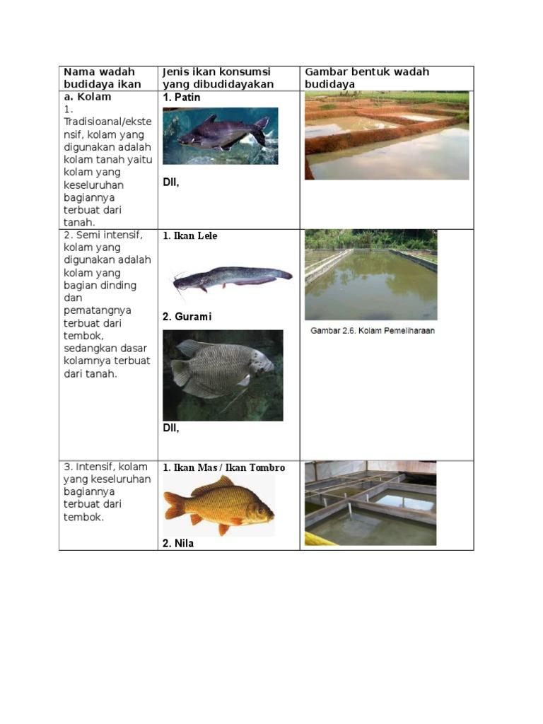 Unduh 720 Koleksi Gambar Ikan Mas Dan Bagiannya HD Gratis