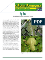 Fig Rust @ Karat Pokok Tin.pdf