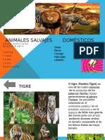 Animales salvajes.pptx