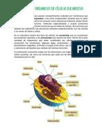 Estructuras y Organelos de Células Eucariotas