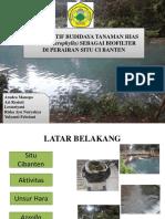 Alternatif Budidaya Tanaman Hias (Azolla Microphylla)