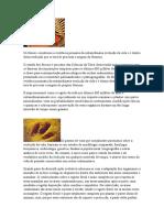 Bio - A evoluçao dos fosseis e a origem da vida.docx