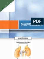 Glandulas Suprarrenales y Patologias