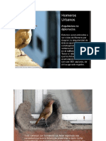 hornero-urbano-ejemplo-de-bitacora.pptx