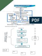 135090211-Patofisiologi-Meningitis-Tb.docx