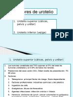 Clase Tum Uroteliales