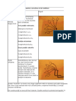 101146993-Program-de-exerciţii-dinamice-corective-si-de-tonifiere-KLAPP.pdf