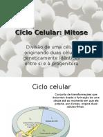 4-Mitose