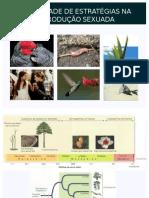 9-Diversidade de Estratgias Na Reprodução Sexuada-plantas