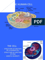 cell overview