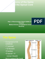 Anatomy of the Spine.ppt