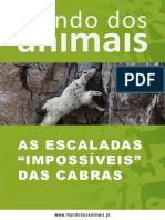 "As Escaladas ""Impossíveis"" das Cabras"