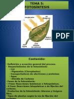 TEMA 5 Fotosintesis