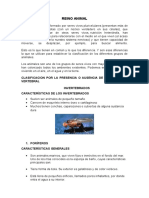 reino animal clasificacion.docx