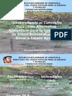 cultivo de yuca