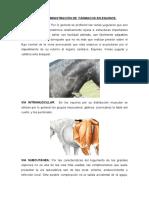 practicas 2 equinos