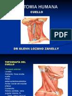anatomiacuello-110413211851-phpapp02.ppt