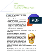Clase 1. Bloque F 12.08.15 Cabeza Osea