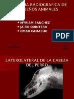 78620046 Anatomia Radiografica de Pequenos Animales