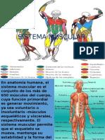 Sistema Muscular Carp. 6,b (2)