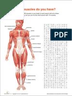 muscle-anatomy