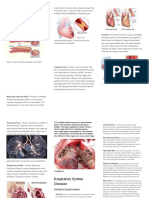 Circulatory System Diseases.docx