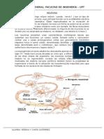 BIOLOGIA :NEURONA , SINAPSIS