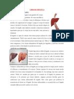Fisiopatologia de La Cirrosis Hepatica