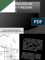Exploración de mamas y región axilar.pptx