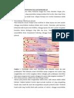 Patofisiologi Hipertensi Dalam Kehamilan