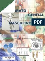 semiologia del aparato genital masculino