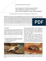 Hepp & Carvalho-e-Silva 2011 - Description and comparison of advertisement calls of Euparkerella brasiliensis and E. cochranae.pdf
