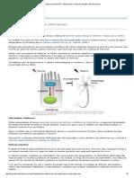 Intestino Tem Escudo de Proteção Contra Parkinson