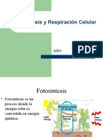 biologia_fotosintesis