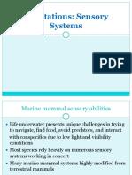 Sensory Adaptations of Marine Mammals