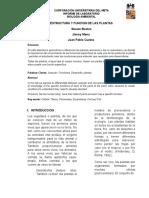 Estructura y Funcion de Las Plantas