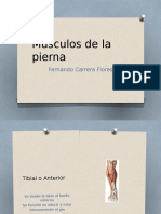 Musculos de La Pierna (1)