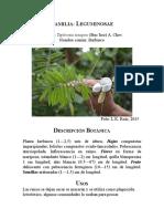 Familia Papilionoideae RUIZ ARIZA