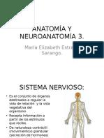 Anatomía y Neuroanatomía 3