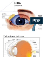 Anatomia Del Ojo ITB