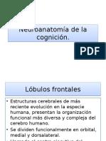 Neuroanatomía de la cognición.pptx