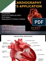 Final Echocardiography