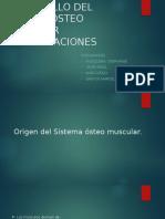 Desarrollo Del Sistema Osteo Muscular