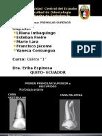Endodoncía premolares superiores