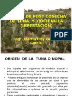 Manejo de Post Cosecha de Tuna y Cochinilla