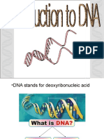 Introduction to DNA Rizwan