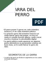 GARRA DEL PERRO.pptx