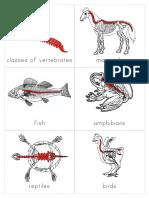 Classes of Vertebrates Introduction Cards